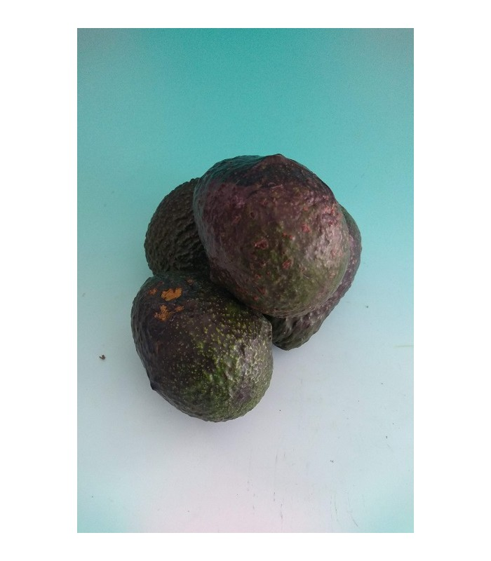 Aguacate, 500 grs.